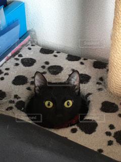 ★可愛い黒猫★ジジみたい★ご自由に加工OK★の写真・画像素材[807017]