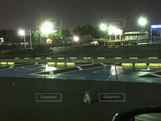 ★夜の猫と駐車場★の写真・画像素材[807024]
