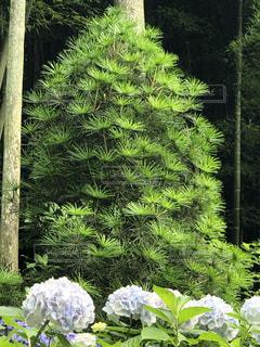 緑色のトトロの写真・画像素材[3369761]