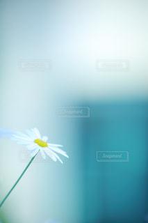 近くの花のアップ - No.826529