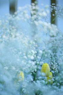 近くに黄色い花のアップの写真・画像素材[826530]