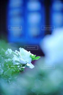 近くの花のアップの写真・画像素材[826531]
