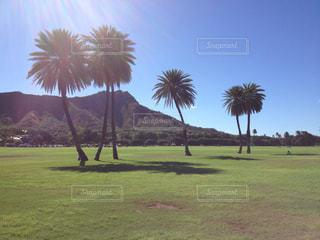 芝生のフィールドのヤシの木の写真・画像素材[807287]