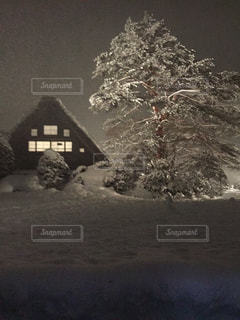 地面の雪の木の写真・画像素材[807446]