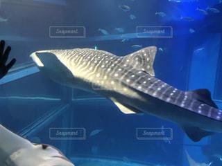 魚ー - No.807594