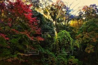 養老渓谷の陽射しの写真・画像素材[807859]