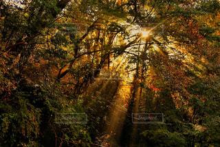 養老渓谷の紅葉の写真・画像素材[807862]