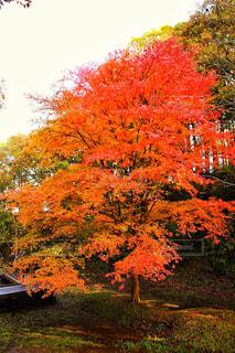 養老渓谷の紅葉の写真・画像素材[807865]