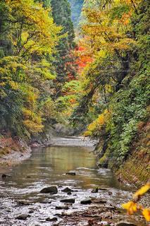 養老渓谷の紅葉の写真・画像素材[807869]