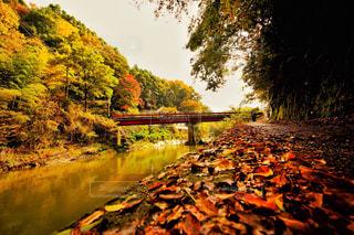 養老渓谷の紅葉の写真・画像素材[807873]