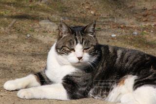 地面に横になっている猫の写真・画像素材[808291]