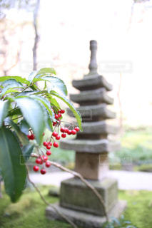 報国寺の写真・画像素材[808294]