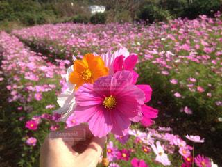 植物にピンクの花 - No.807759