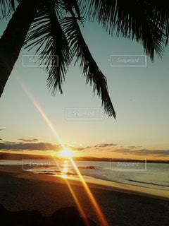 ヤシの木とビーチに沈む夕日の写真・画像素材[810799]