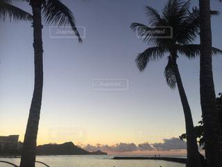 海とヤシの木の写真・画像素材[810787]