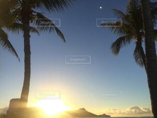 ヤシの木とビーチの写真・画像素材[810793]