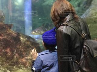 魚を見る親子 - No.808368