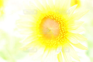近くの花のアップ - No.808403