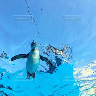 空飛ぶペンギンの写真・画像素材[3068525]