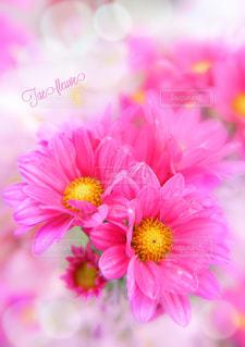 元気が出る華やかな花の写真・画像素材[808540]