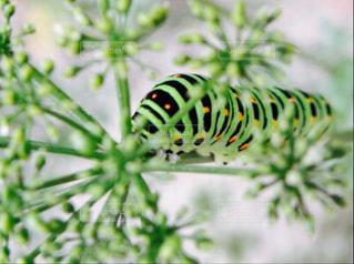 近くの植物のアップの写真・画像素材[815830]