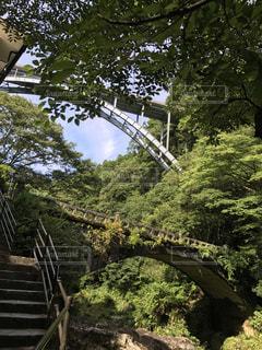 下から見上げた橋の写真・画像素材[809069]