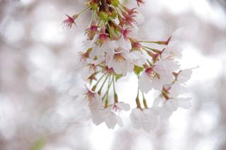 春の写真・画像素材[346169]
