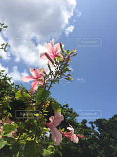 自然の写真・画像素材[348023]
