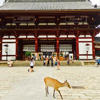奈良公園の写真・画像素材[809840]