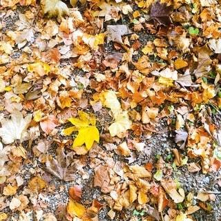 葉の山。の写真・画像素材[3827145]