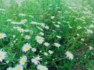 花の写真・画像素材[27481]