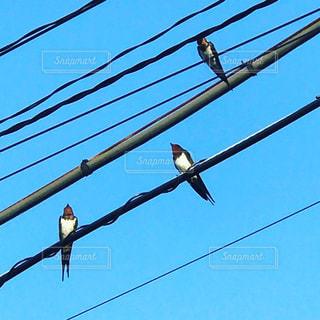 ワイヤーの上に座って鳥の群れ - No.809684