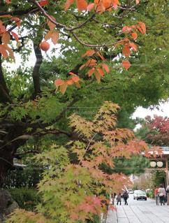 小さい秋かなの写真・画像素材[820871]