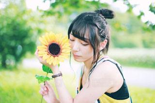 向日葵の写真・画像素材[1383311]