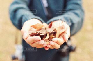 落ち葉の写真・画像素材[1527583]