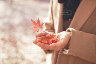 優しい秋を感じての写真・画像素材[1527586]