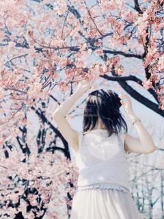 また桜が咲く頃まで。の写真・画像素材[1977440]