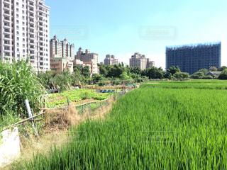 台湾の市街地と農地の境目の写真・画像素材[810171]