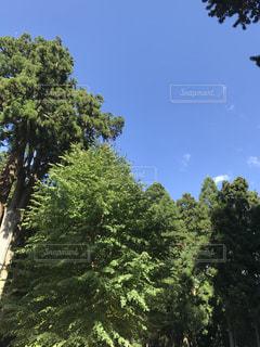 森の大きな木 - No.810296
