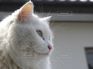 猫の横顔の写真・画像素材[1065393]