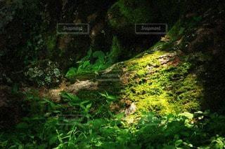 木漏れ日の写真・画像素材[3511954]