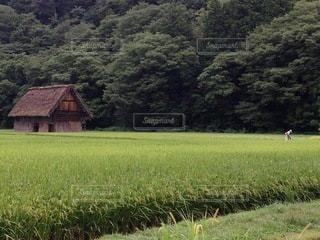 緑豊かな季節の写真・画像素材[3600252]
