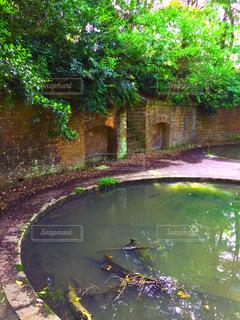 水の体の横にある池の写真・画像素材[1202835]