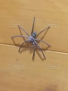 近くに虫のアップの写真・画像素材[811088]