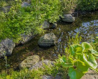 春の小川の写真・画像素材[1131221]