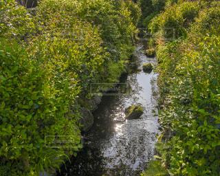 木々 に囲まれた川の写真・画像素材[1131222]