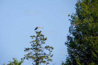 木の上を飛ぶ鳥の群れの写真・画像素材[1191136]