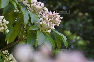 近くの花のアップの写真・画像素材[1191140]