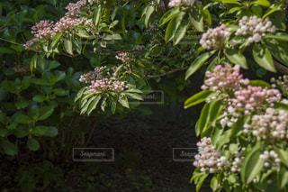 近くのフラワー ガーデンの写真・画像素材[1191141]