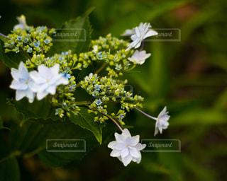 近くの花のアップの写真・画像素材[1215723]